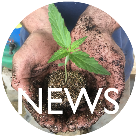 Bravo Botanicals News